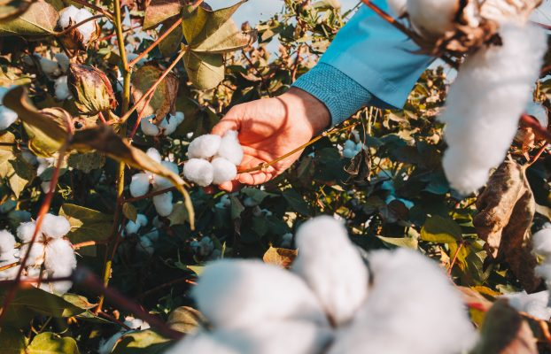What's cotton into you ?